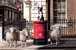 Sheep on the row Wool Week 2015