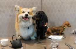 Dining with your dog: Brunch at M London